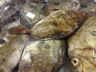 Apartado con peces San Pedro, ahora en otoño en su mejor momento